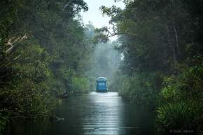 Magical Jungle Adventure to Tanjung Puting National Park Kalimantan
