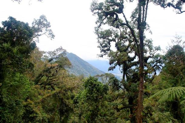Gunung Gede Cibodas pemandangan