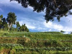 Gunung Gede via Gunung Putri Petani